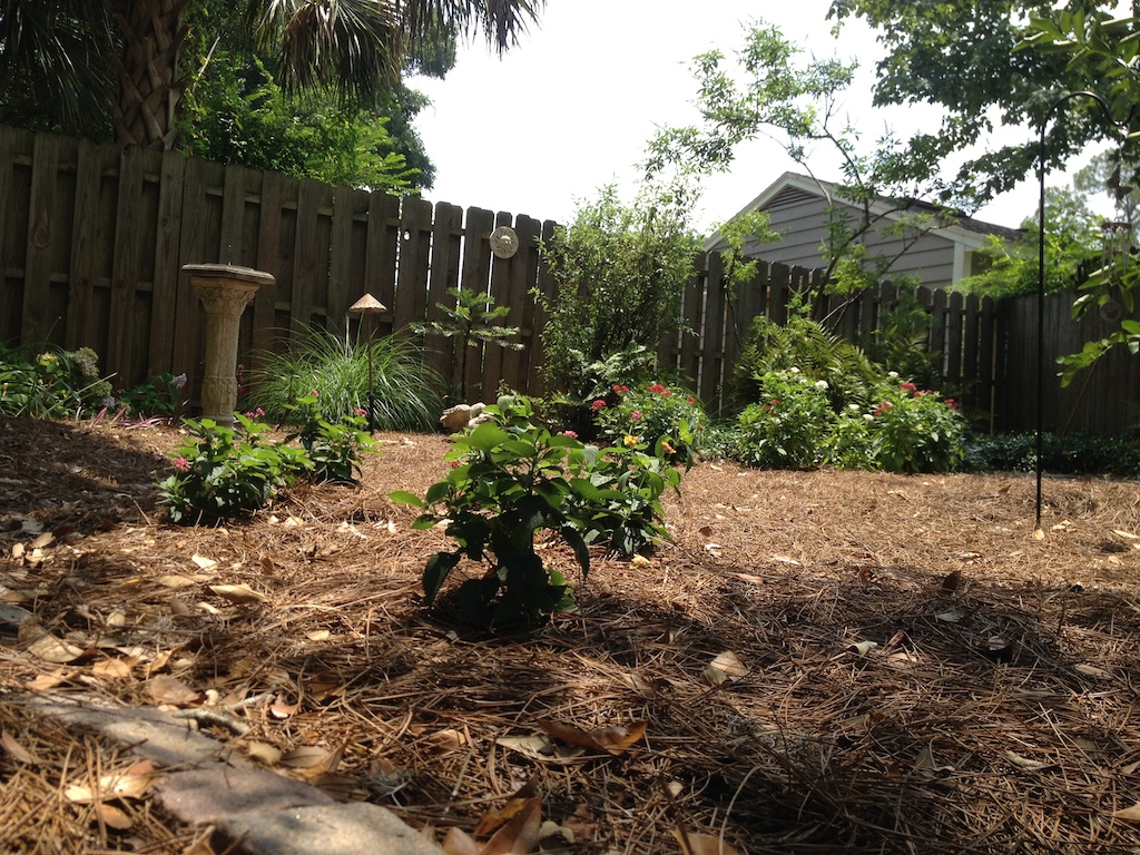 August\'s memorial lime tree and butterfly garden   There was a boy . . .